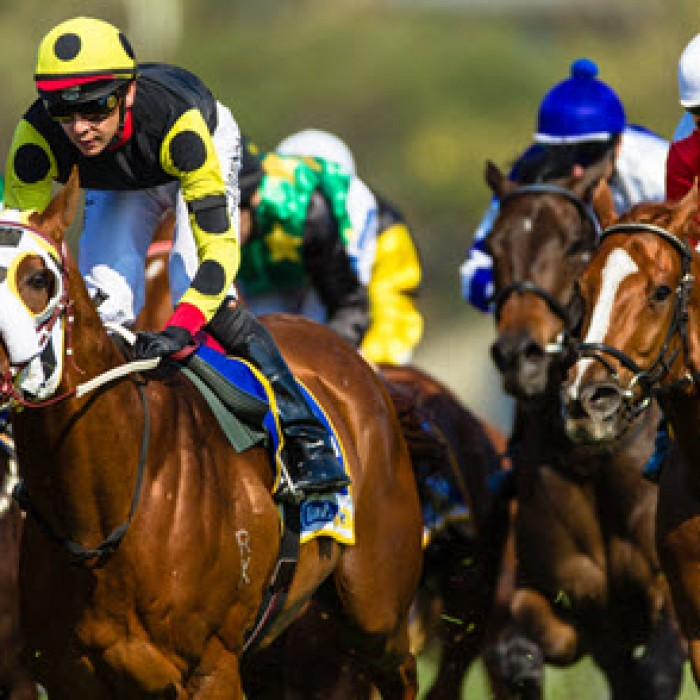 horse racing free tips
